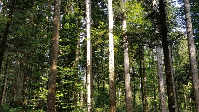 Rilievi in bosco per applicare il metodo Biodelta4